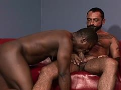 Gays ficken interracial